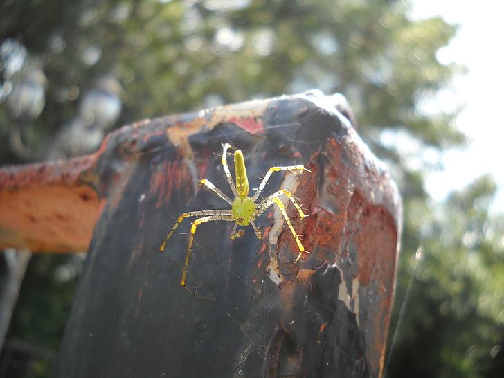 людина-павук, жовтий, Комаха, Природа, Природні, Хижак, Арахнофобія