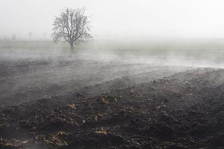 мъгла, настроение, пейзаж, мъгла банка, мъгла ден, ноември, орни