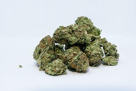 marihuana, cànnabis, males herbes, brot, verd, olla, mèdica