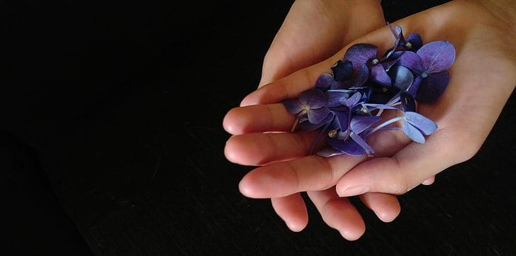 mor çiçekler, el, çiçekler, Menekşe, negatif boşluk, mor, Spa
