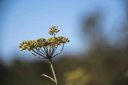 flower, wild, nature, wild flowers, grass, spring, wild plant