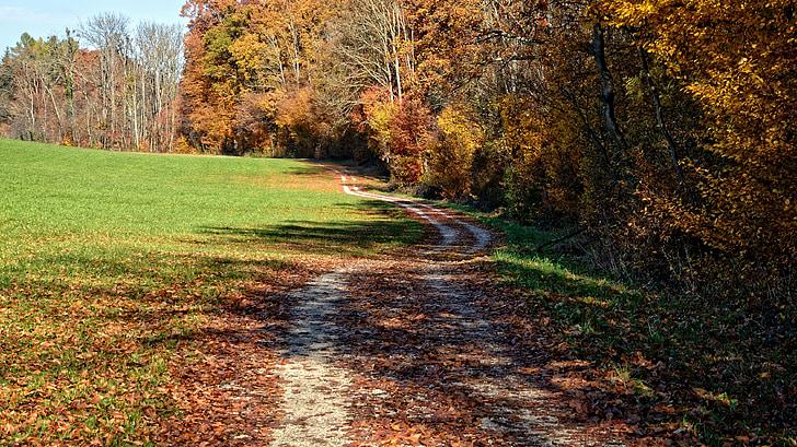 jeseň, stromy, vzdialenosť, Zlatá jeseň, listy, nálada, listy na jeseň