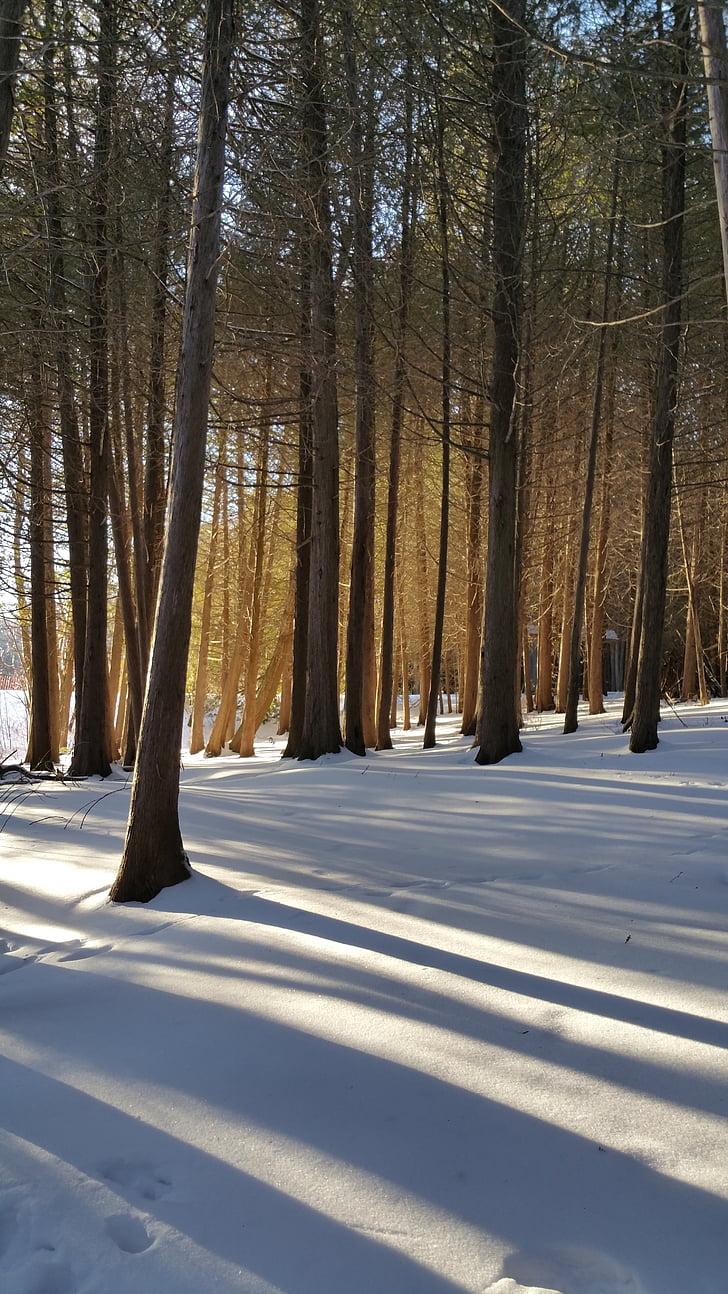 winter, snow, sun, cold