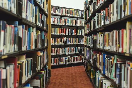 books, research, library, shelves, read, knowledge, bookworm