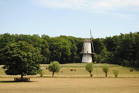 mill, landscape, netherlands, historic mill, historical, holland