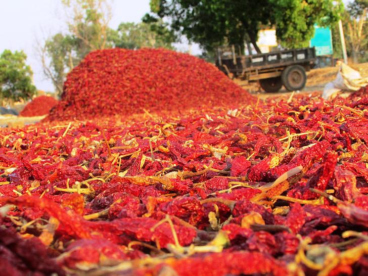 čili paprika, Čile paprike, čili paprika, voće, paprike, Solanaceae, crvene suhe čili