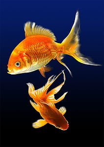 риби, акваріум, води, підводний, море життя, одна тварина, плавання