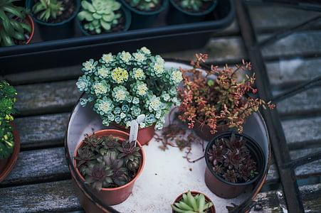 decoration, decorative plants, flora, plants, potted plants, flower Pot, plant