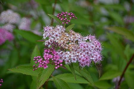 Blume, Natur, Sommerblumen, Frühling, Garten, Flora, Blüte