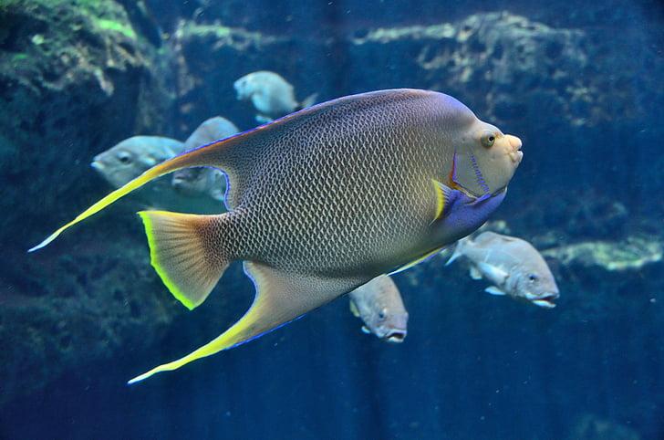 tropical fish, aquarium, saltwater, water, underwater, ocean, sea