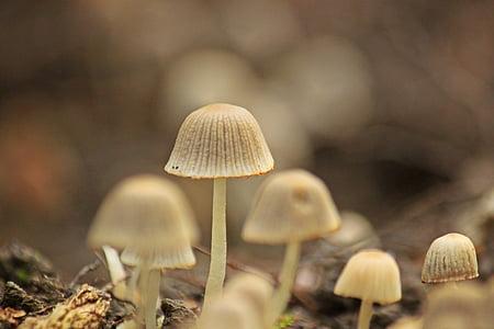 грибы, лес, Природа, Осень, Лес Пол, маленький, завод