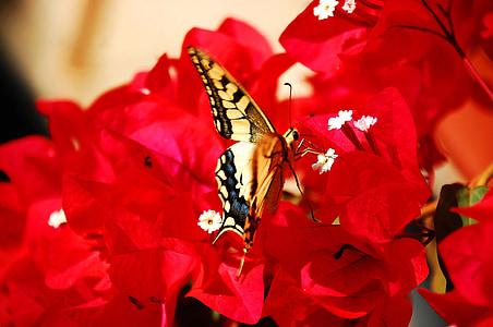пеперуда, насекоми, цветни, цвете, жълто, природата