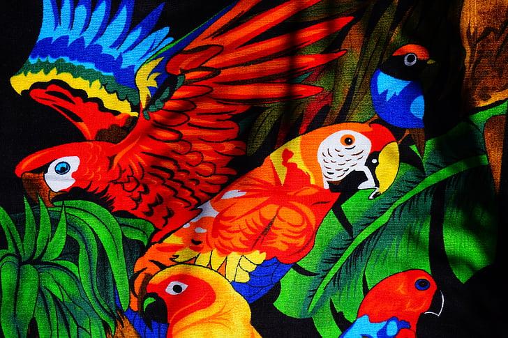 papagájok, Aras, Lori, papagáj, madarak, törülköző, fürdőlepedő