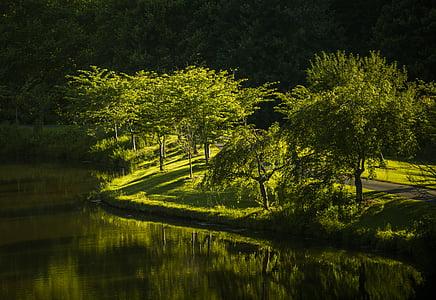 Park, Natura, Virginia, krajobraz, łąka, światło słoneczne, lasu