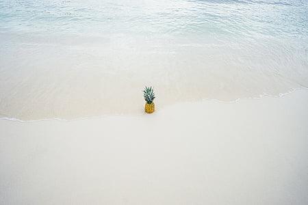 pineapple, ripe, water, beach, sea, coast, sand