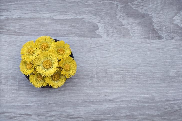 Tussilago farfara, gėlė, gėlės, geltona, geltona gėlė, pradžioje gama, augalų