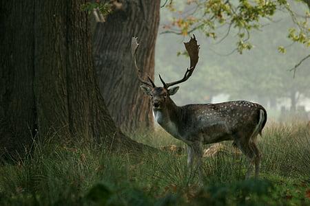 사슴, 나무, 사슴, 야생 동물, 자연, 동물, 포유 동물