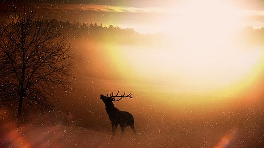 Feld, Natur, Hirsch, Wild, Geweih, Sonnenaufgang, Beleuchtung