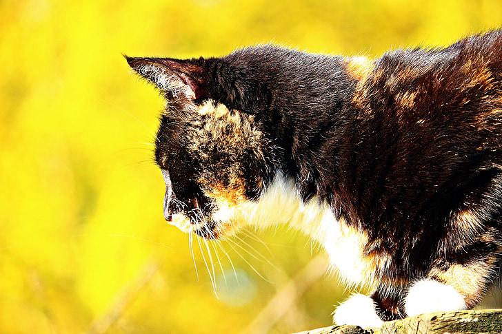 cat, lucky cat, three coloured, autumn, leaves, mieze, kitten