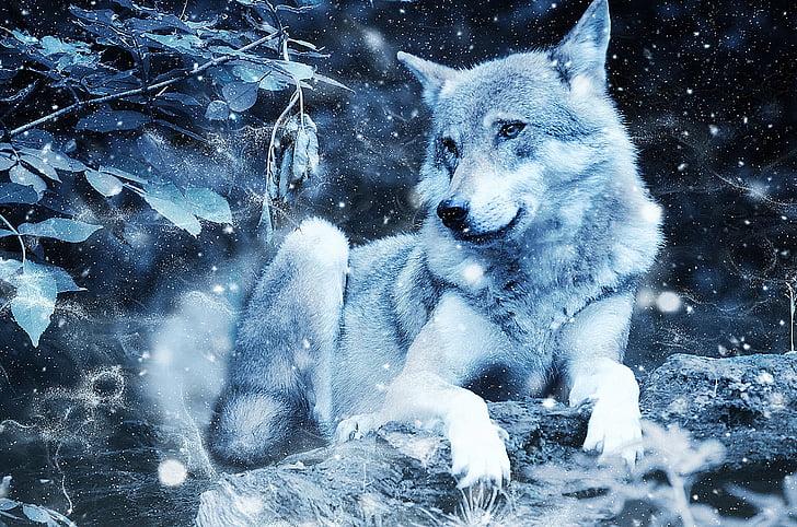 Wolf, Tier, Predator, Kunst, Jahrgang, Schnee, Natur