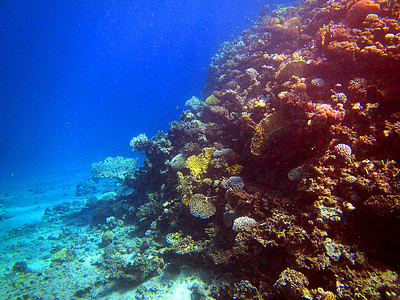 red sea, coral, fish, egypt, diving, underwater, underwater world
