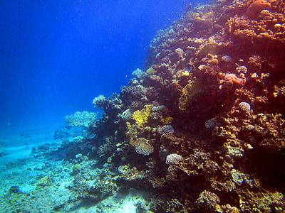 Mar Roig, Coral, peix, Egipte, Submarinisme, sota l'aigua, món submarí