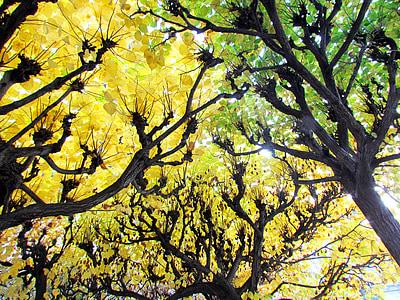 δάσος φυλλοβόλων, Κίτρινο, το φθινόπωρο, Οκτώβριος, φωτεινή, δάσος, πράσινο