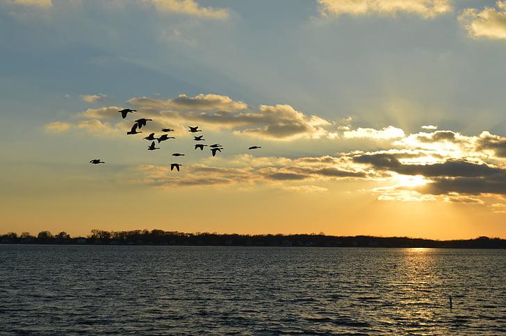 Luonto, Sunset, Long island, Ocean, Bay, maahanmuutto, Linnut