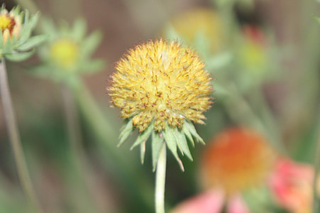 bunga, kuning, bunga kuning, alam, musim semi, hijau, musim panas