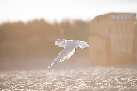 white, bird, lying, ground, daytime, flight, seagull