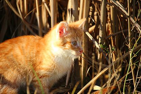 cat, kitten, cat baby, young cats, mackerel, red mackerel tabby, autumn