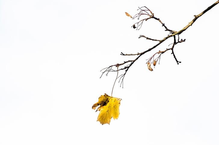 ősz, fa, fák, Park, fióktelep, ágak, levél