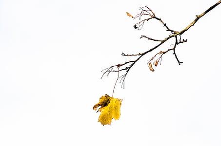 Sügis, puu, puud, Park, filiaali, filiaalid, lehed