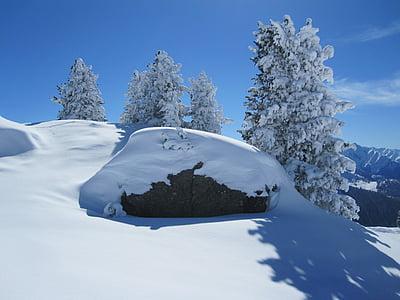 snow, winter, mountain, wintry, tree, winter dream, nature