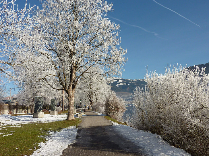 wintry, snow, tree, winter, cold, hiking, winter magic