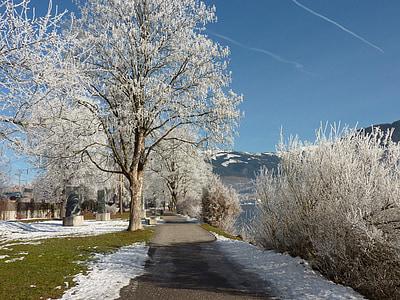 Zimní, sníh, strom, Zimní, chlad, pěší turistika, Zimní kouzlo