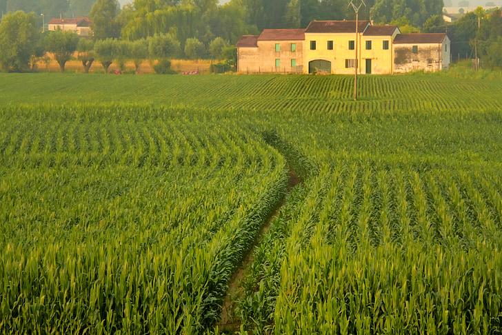 cây trồng, cảnh quan, nông nghiệp, ngôi nhà trang trại, màu xanh lá cây, môi trường, ý
