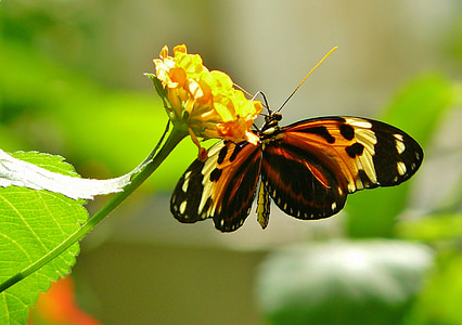 Motyl, motyle, zwierząt, owad, zwierzęta, exot, egzotyczne