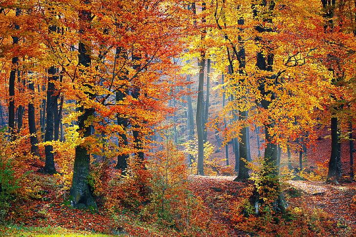 meži, meža, daba, ainava, koks, meža ainava, rudens