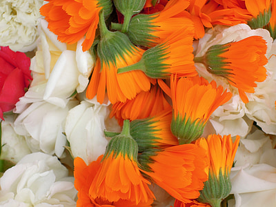 gvazdikai, gėlės, pavasarį, Medetkų, oranžinė, Pavasario gamtos, gėlė