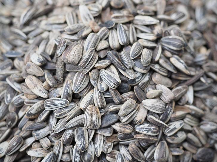 Семена подсолнечника, птица семя, Семена, питание, семя, крупным планом, органические