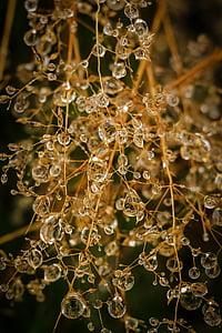 dråber, vand, drop, natur, vanddråber, regn, dug