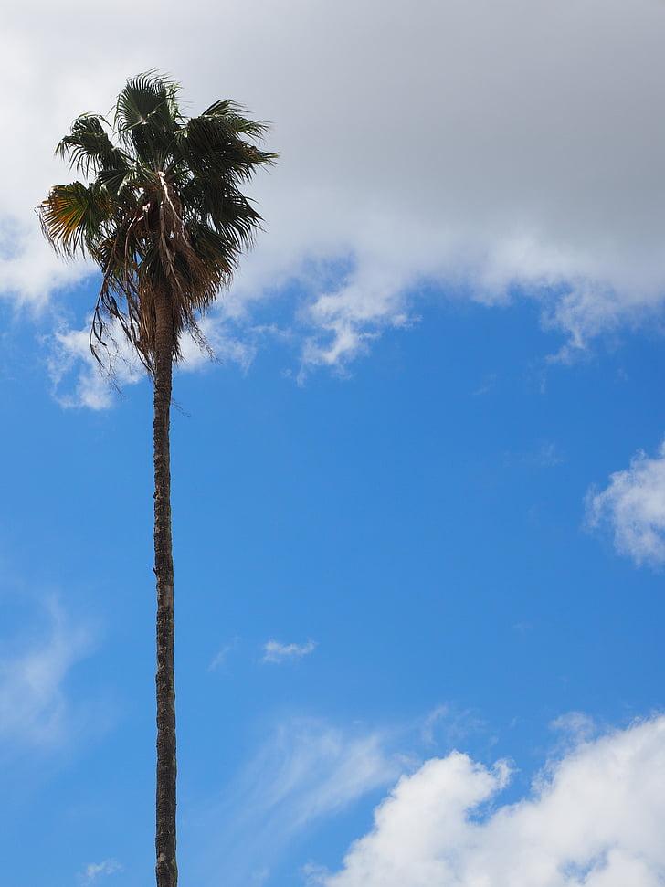 palm, tree, tribe, log, palm leaves, individually, individual tree