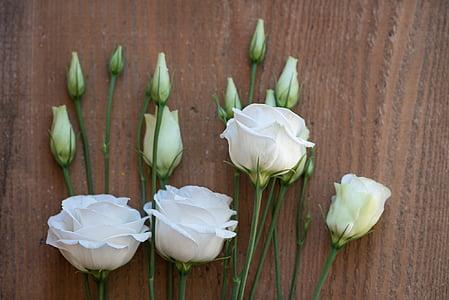 : Lisianthus, flor, flor, flor, blanc, flor blanca, flors blanques