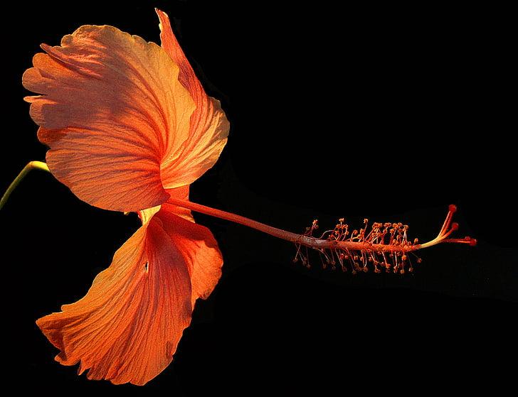 flor, flor, flor, tancar, vermell, natura, groc