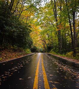 natura, fulles, arbres, verd, carretera, viatge, viatges