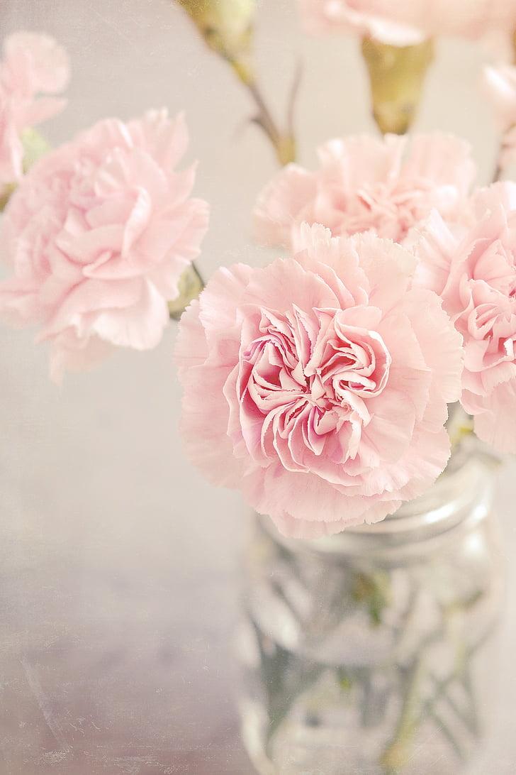 Карамфил, цветя, розово, розови цветя, Карамфил розов, търг, романтичен