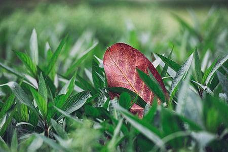 Príroda, Zelená, rastliny, tráva, padlých, Leaf, listy