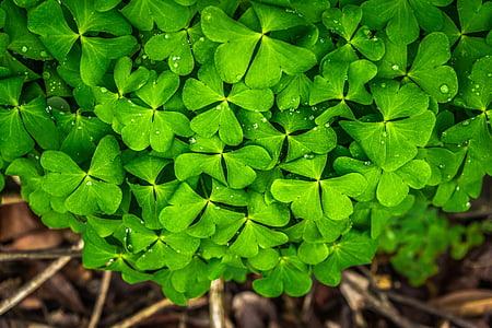 hoja, naturaleza, verde, primavera, Resumen, plantas, por goteo