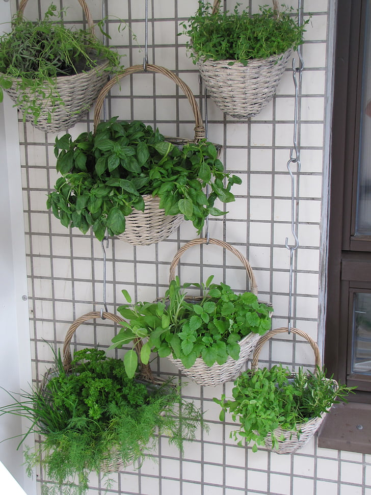 balcó, herbes, verkikaalipuutarha, plantació vertical, plantació de cistelles, jardí de paret, herba